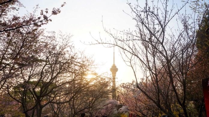亞洲櫻花季景點-北京玉淵潭公園。圖/翻攝自Tripbaa趣吧!亞洲自由行專家
