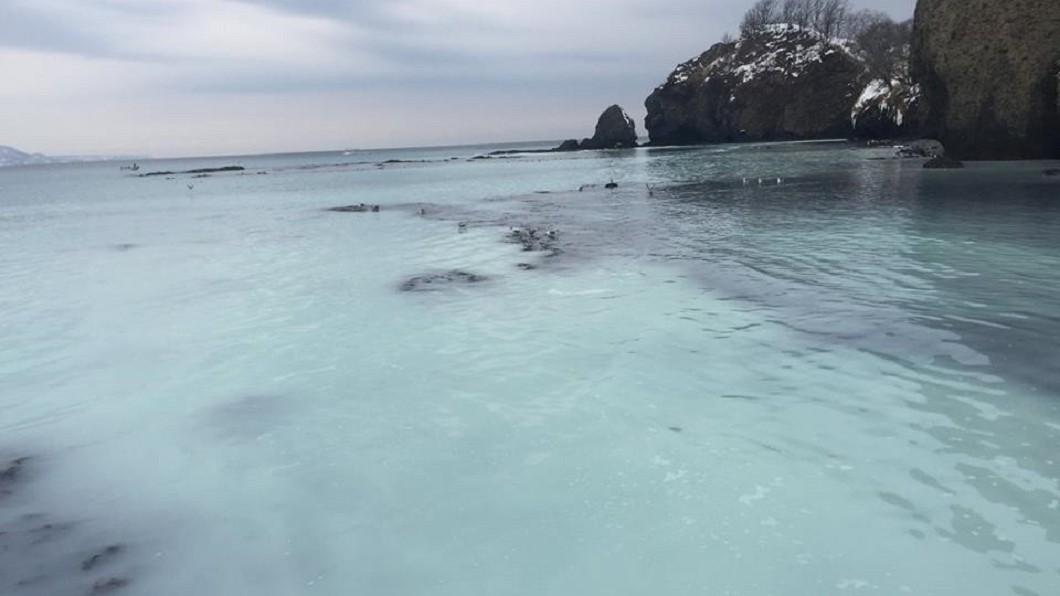 圖/翻攝自「小樽のおさかな普及推進委員会」臉書 鯡魚群求偶「集體噴發」 沿岸轉眼成「乳白海洋」