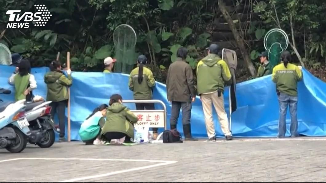 圖/TVBS 虛驚!5隻野狗闖動物園 僅抓1隻、其餘逃竄暫無影響