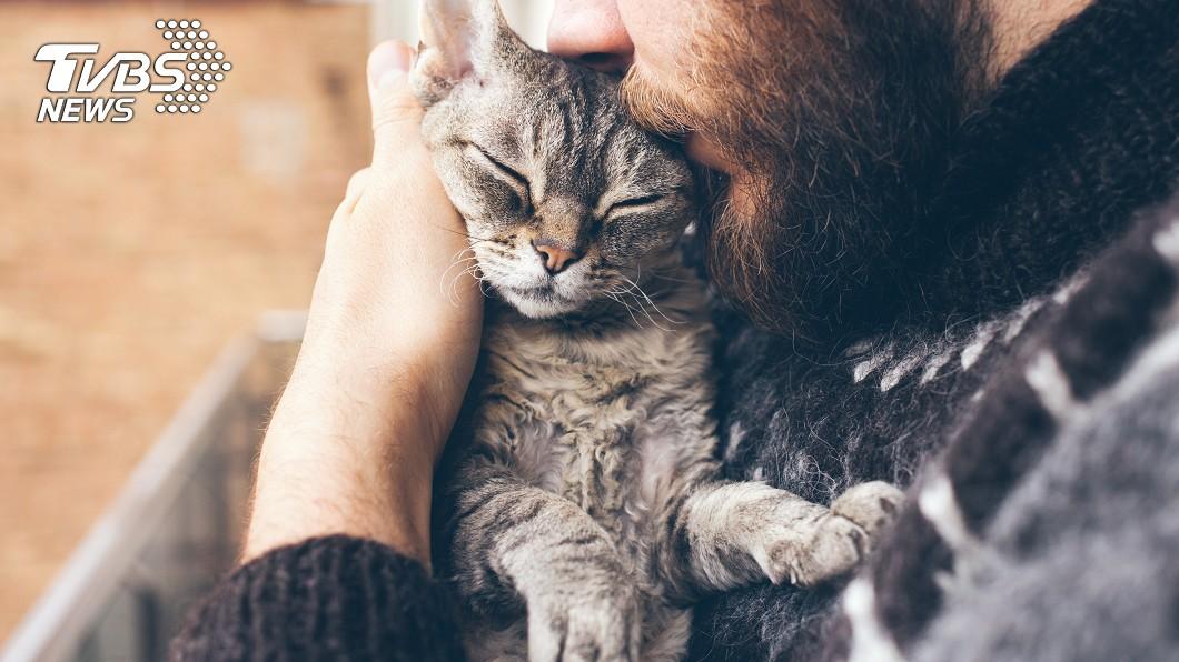 大陸南京一名主人花人民幣1萬將自家貓送去割雙眼皮。示意圖/shutterstock 愛牠還是折磨?他竟砸逾4萬元 幫愛貓「割雙眼皮」