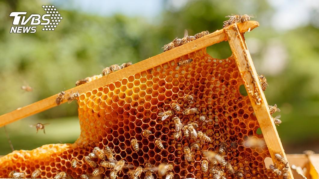 大陸一輛私人客車上爬滿了近萬隻的蜜蜂。示意圖/shutterstock 慎入!車輛爬滿近萬隻蜜蜂 網崩潰:密集恐懼症