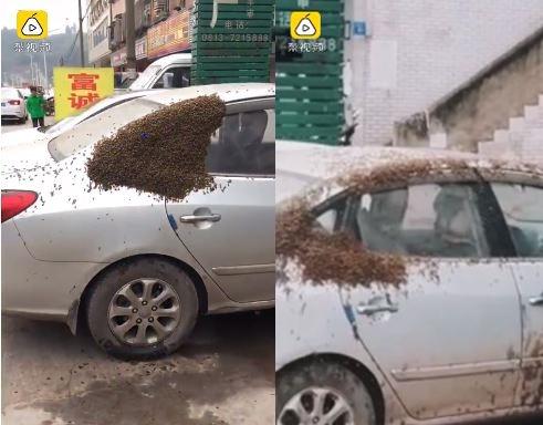 車輛上爬滿近萬隻蜜蜂。圖/翻攝自梨視頻