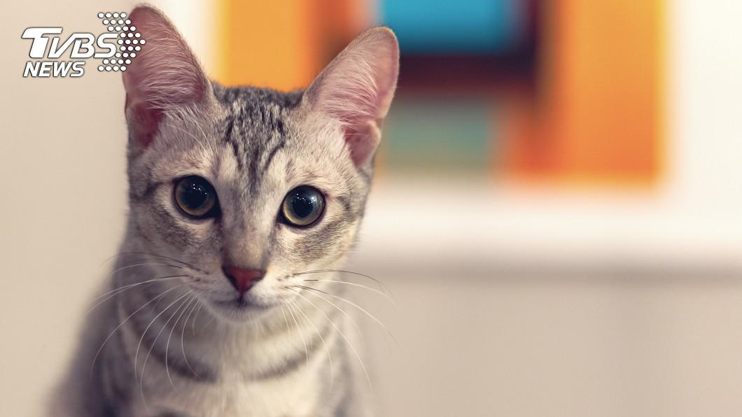 女子不慎被貓咪咬破皮後,竟須支付150萬元台幣的醫療費。示意圖/TVBS 被貓咬一口竟要付150萬醫治 她諷:我的葬禮還更便宜