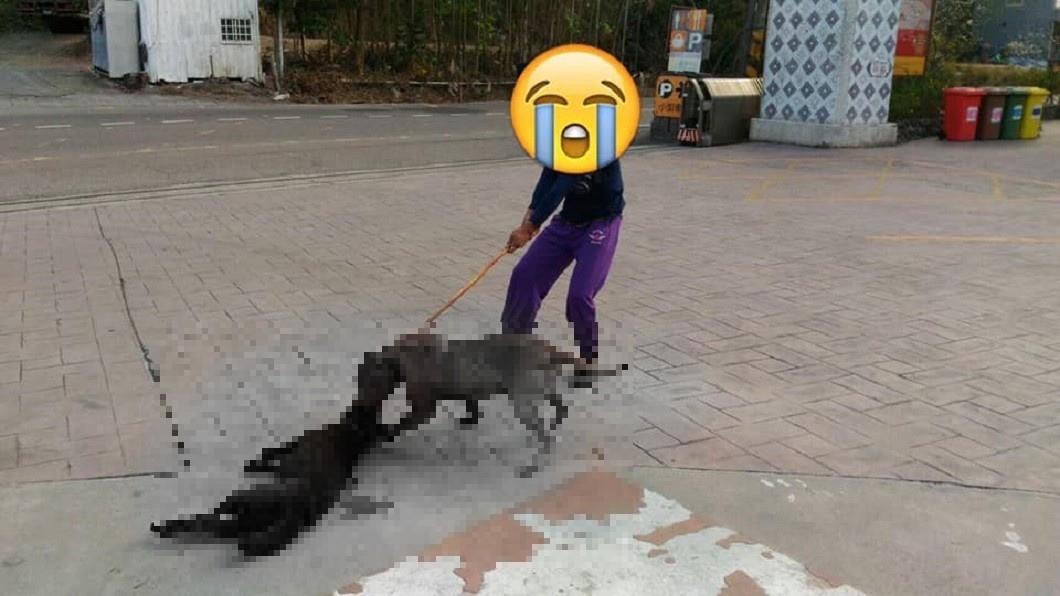 圖/爆料公社 比特犬狠咬半小時…黑狗慘死 飼主淡回:不小心跑出來