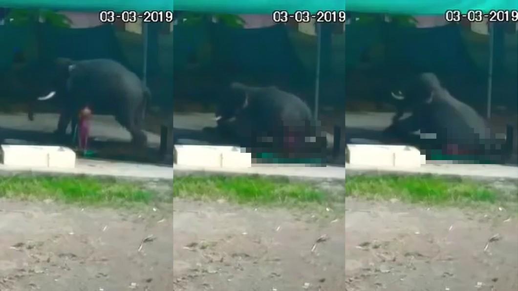 圖/翻攝自 YouTube 他幫大象洗澡滑一跤 被一屁股坐下「壓成爛泥」
