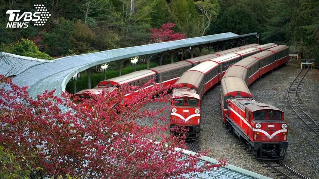 圖/中央社 阿里山花季 林鐵推主題列車帶你走訪秘境