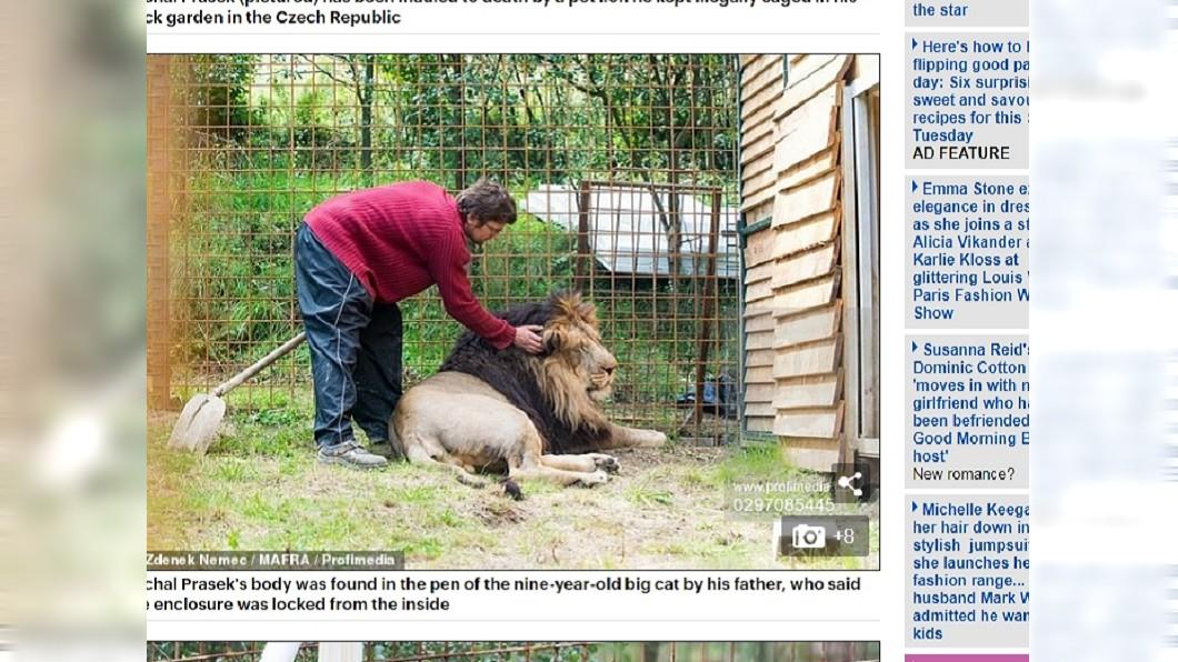 圖/翻攝自每日郵報 後院養2獅當寵物…男慘遭咬死 居民樂喊:終於!