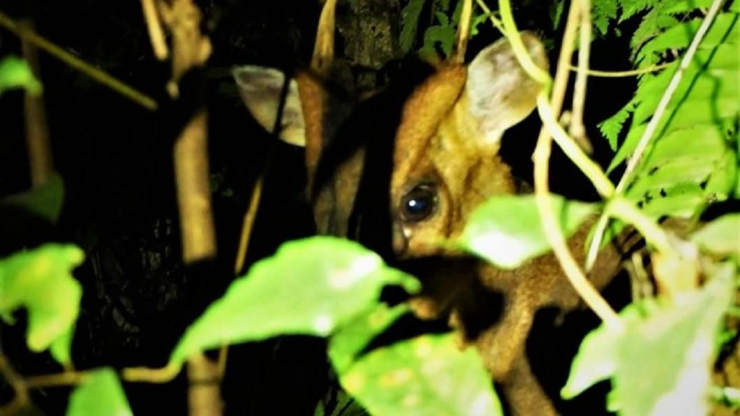 清明端午連假親子活動-台東知本林道夜間生態探索。(圖/Tripbaa趣吧!亞洲自由行專家)