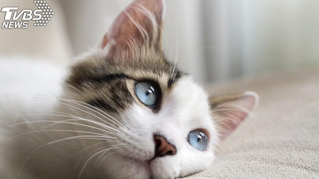 寵物示意圖/TVBS 毛孩子臨死的掛念 寵物溝通師:牠們最放不下「這件事」