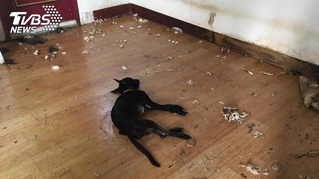 圖/台北市動保處提供 飼主搬家留2犬守屋 黑狗狂啃同伴屍骨止飢仍亡
