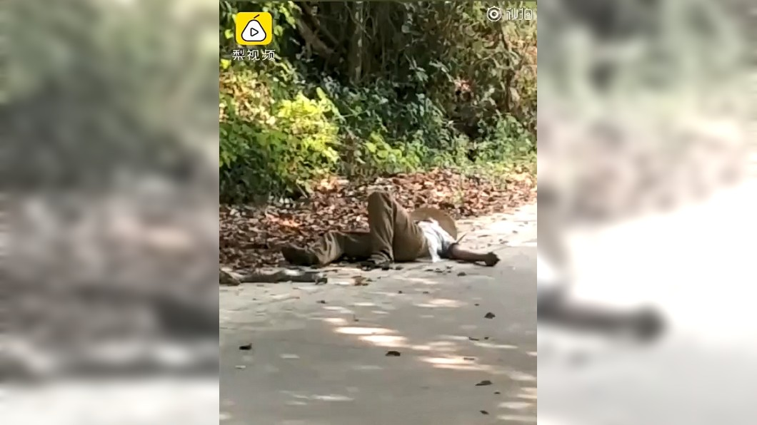 潘男慘遭眼鏡王蛇反咬,倒在地上動彈不得。圖/翻攝自微博