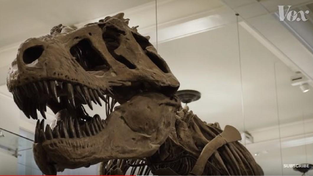 圖/翻攝自Vox YouTube 重現活生生的恐龍 專家從出土化石拼湊