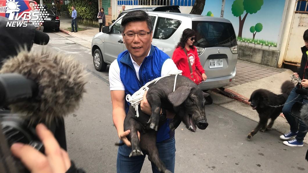 圖/中央社 不滿陳明通禽獸說 藍營新北議員帶豬狗抗議