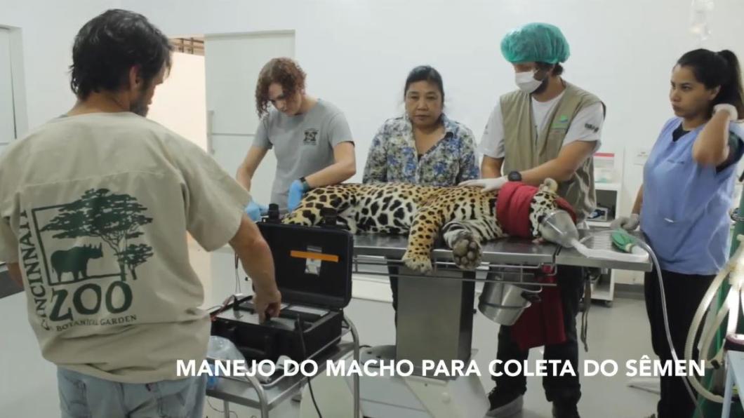 圖/翻攝自YouTube,Associação Mata Ciliar