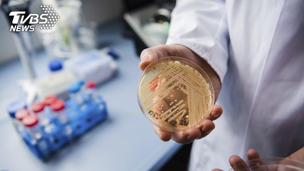 大多數的耳念珠菌對1種以上的抗生素具有抗藥性。圖/達志影像美聯社 抗藥性超強!超級細菌波及全球 感染90天內死亡
