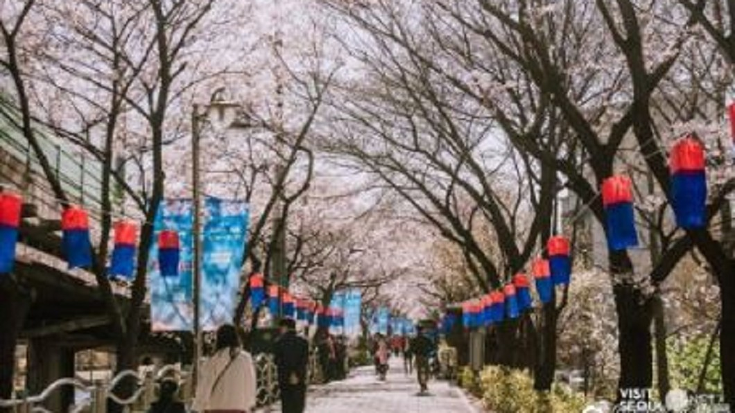 圖/翻攝自首尔旅游局 微博 首爾汝矣島櫻花滿開 日吸350萬遊客
