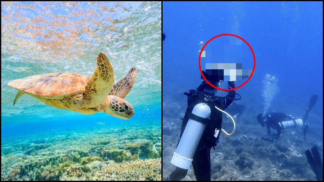 圖/(左)TVBS示意圖,(右)翻攝臉書靠北潛水 一張照片罰30萬!潛水男爽摸海龜 網:關他氧氣瓶