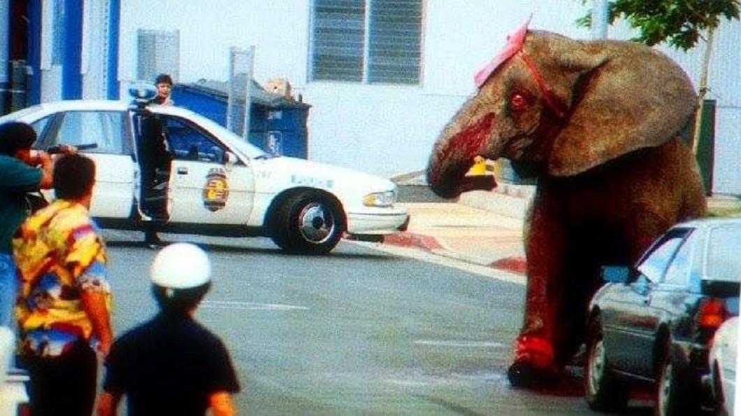 被虐待多年的泰克逃出馬戲團,隨即被警方開槍殺死。圖/翻攝自臉書《Green Monday》 馬戲團大象遭虐待12年...怒踩訓練員被開86槍慘死