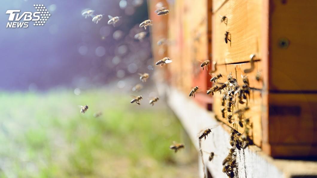 示意圖/TVBS 「分家」蜜蜂找新巢 東京出現上萬隻蜂群