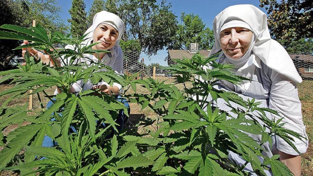 美國一群修女專門種植大麻,每年賺進100萬美金。(圖/翻攝自推特) 修女也瘋狂?為救毒蟲酒鬼 她們專種大麻