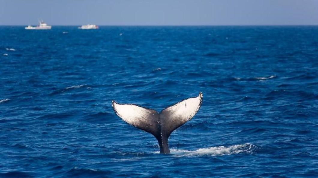 沖繩景點四季玩法-賞鯨。(圖/Tripbaa趣吧!亞洲自由行專家)