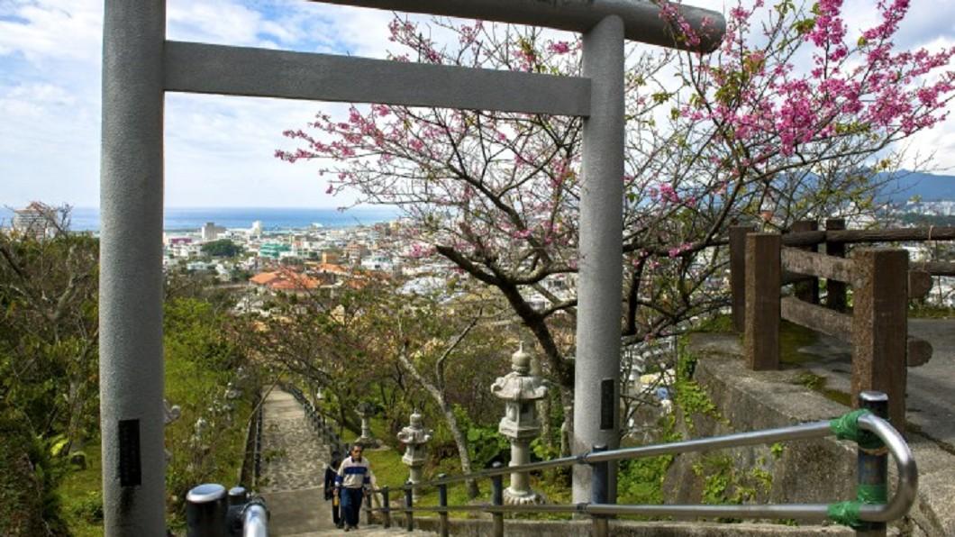 沖繩景點四季玩法-沖繩名護櫻花季。(圖/翻攝自© Okinawa Convention&Visitors Bureau)
