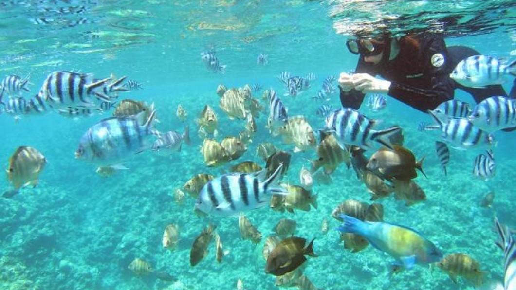 青洞浮潛。圖/Tripbaa趣吧!亞洲自由行專家 沖繩旅遊看這篇就夠了! 四季玩法各有不同魅力