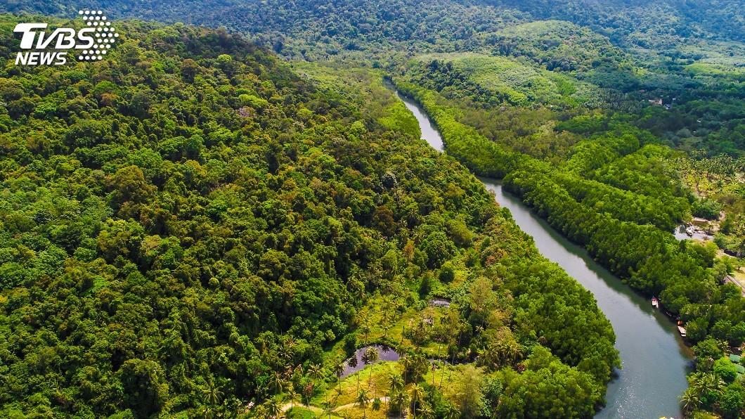 示意圖/TVBS 去年1200萬公頃熱帶雨林消失 相當於一個比利時面積