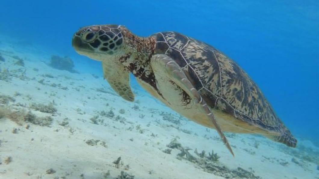 沖繩浮潛地點-渡嘉志久海灘。(圖/Tripbaa趣吧!亞洲自由行專家)