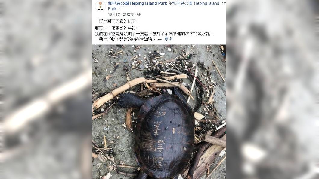 圖/翻攝自 基隆和平島公園臉書