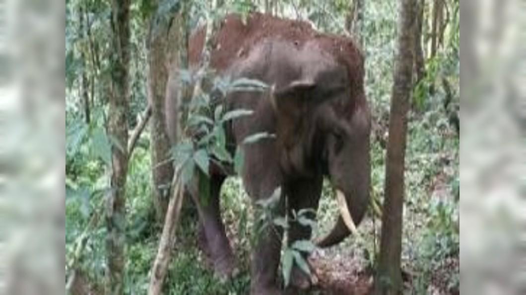 圖/翻攝自洋洋大海63微博 大象太多干擾居民? 波札那獵象禁令將被廢除
