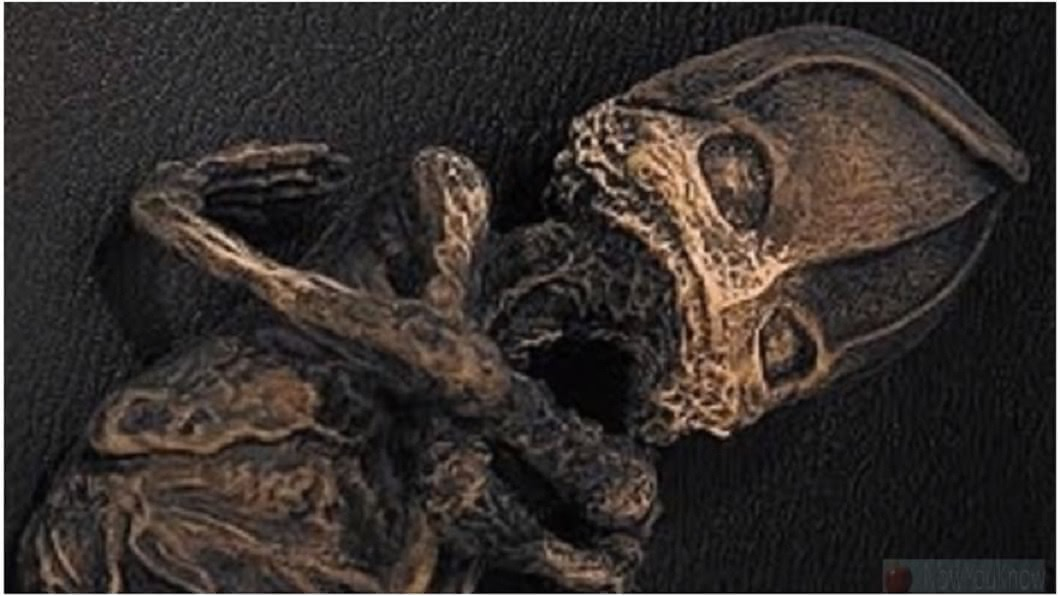 事後這具嬰兒死亡,被後人製作成標本,經過23年的研究,最近科學家揭露事實真相。(圖/翻攝自YouTube)