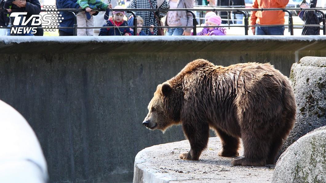 大批遊客無視告示牌,違規餵食園內動物。示意圖/TVBS 遊客無視警告狂餵百公斤食物 可憐棕熊拉慘了