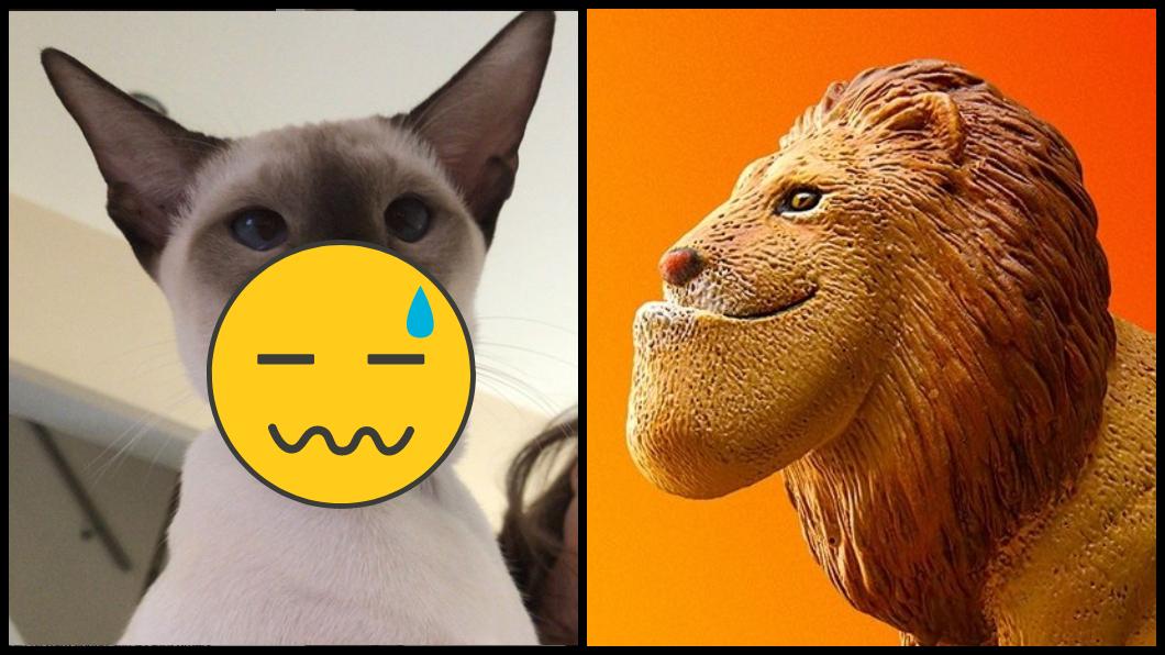 圖/翻攝IG與臉書後斗星球 好奇心殺死一隻貓!牠回家突變「戽斗星人」 主人笑翻
