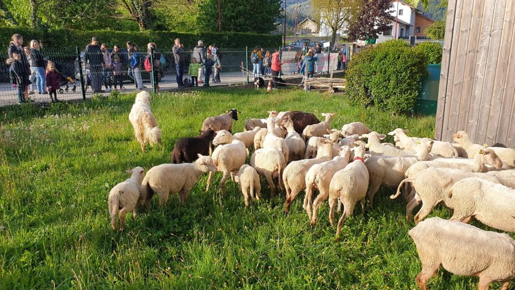 牧民為了補足人數,帶了50頭羊到校「報名」。圖/翻攝自推特 學生不足被迫減班 牧民「以羊充數」當小學生