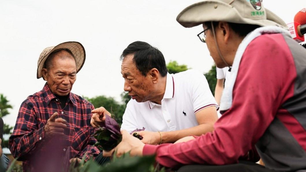郭台銘今日到花蓮農地,向農民學習摘菜。圖/翻攝自 郭台銘 臉書