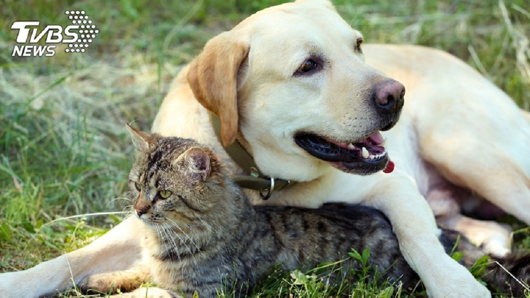 許多人家中會飼養狗狗或貓咪這類的寵物。(示意圖/TVBS) 寵物殯葬出包提早火化 家人崩潰:看不到毛小孩最後一面