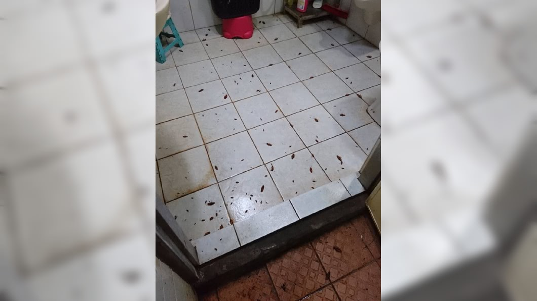 一名女網友分享自己用水煙殺蟑螂的成效。(圖/翻攝自爆廢公社)