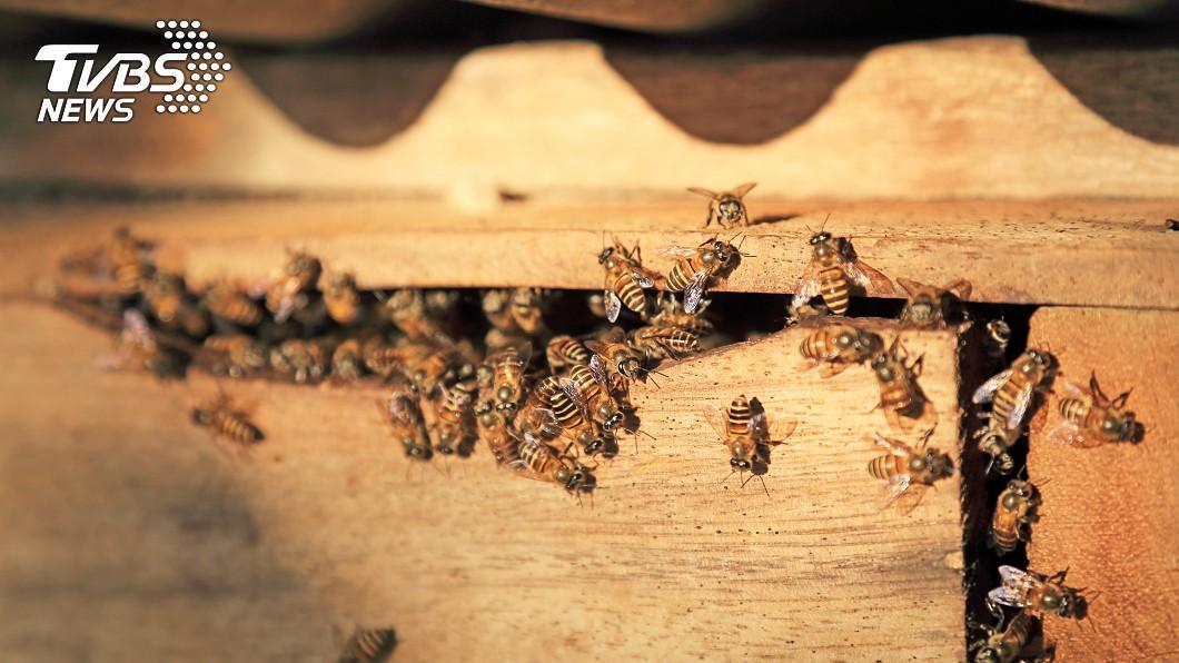 在臥室牆內竟發現 「巨型蜂窩」。示意圖/TVBS 夫妻被嗡嗡聲吵1年!竟是8萬隻蜜蜂當鄰居