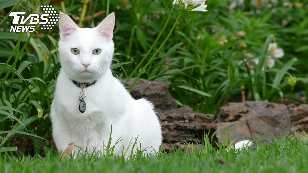 墨西哥流浪動物的問題嚴重。示意圖/TVBS 慎入!白貓慘遭鱷魚咬成兩半 「讓牠們待室內」
