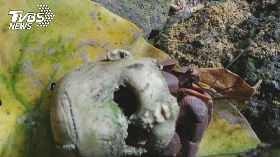 4年前在綠島就曾發現過「鬼頭娃娃」。圖/TVBS資料照