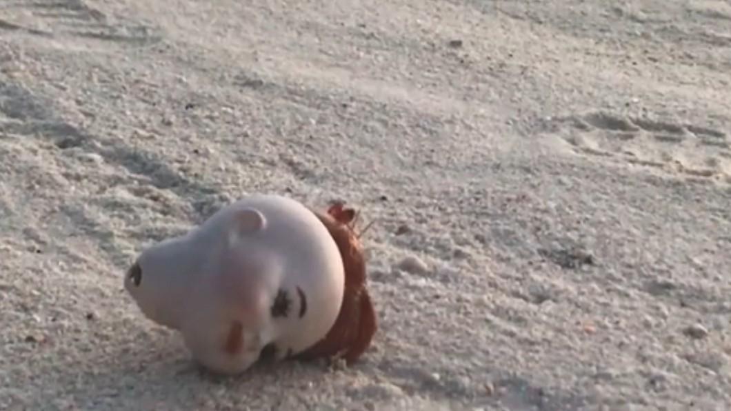 一個詭異的娃娃頭島上海灘上。圖/翻攝自Joseph Cronk臉書 嬰頭顱橫倒沙灘?長出「紅髮」緩慢前進 真相讓網友哭慘