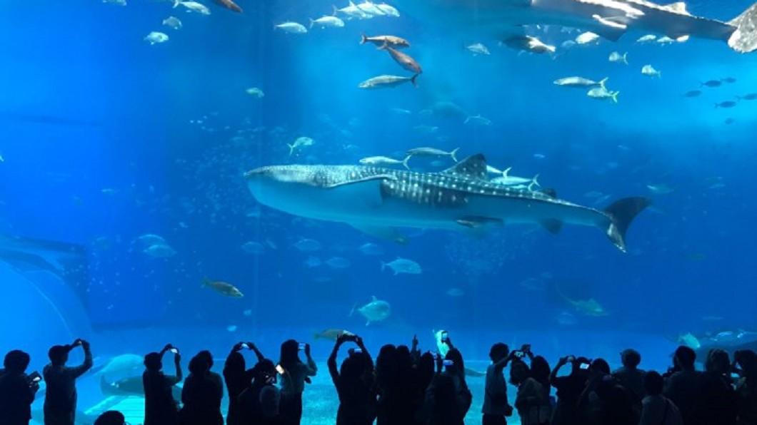 沖繩北部景點推薦-沖繩美麗海水族館。(圖/Tripbaa趣吧!亞洲自由行專家)
