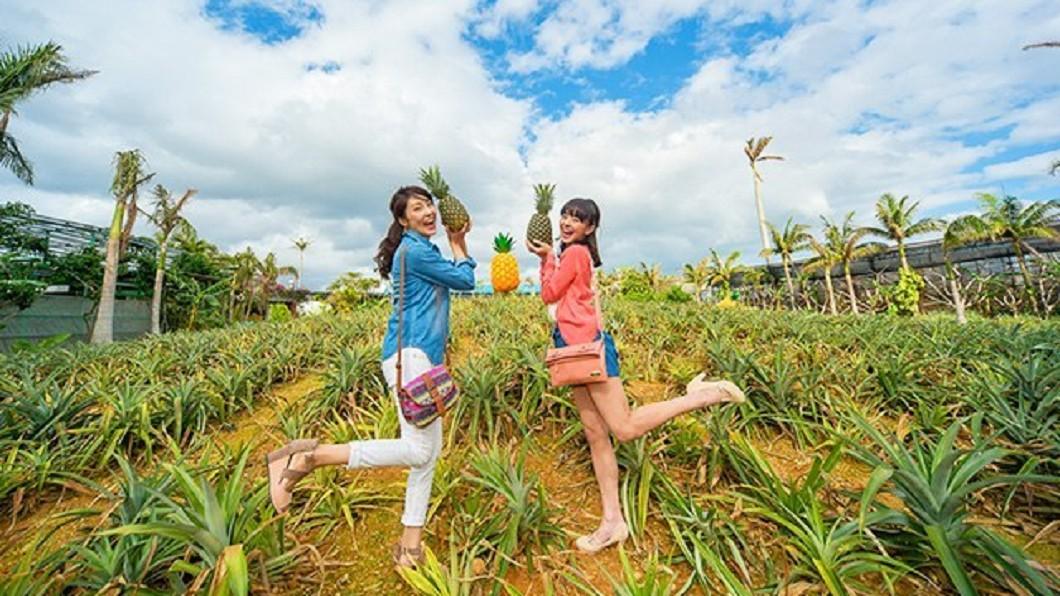 沖繩北部美食景點-名護鳳梨園。(圖/Tripbaa趣吧!亞洲自由行專家)