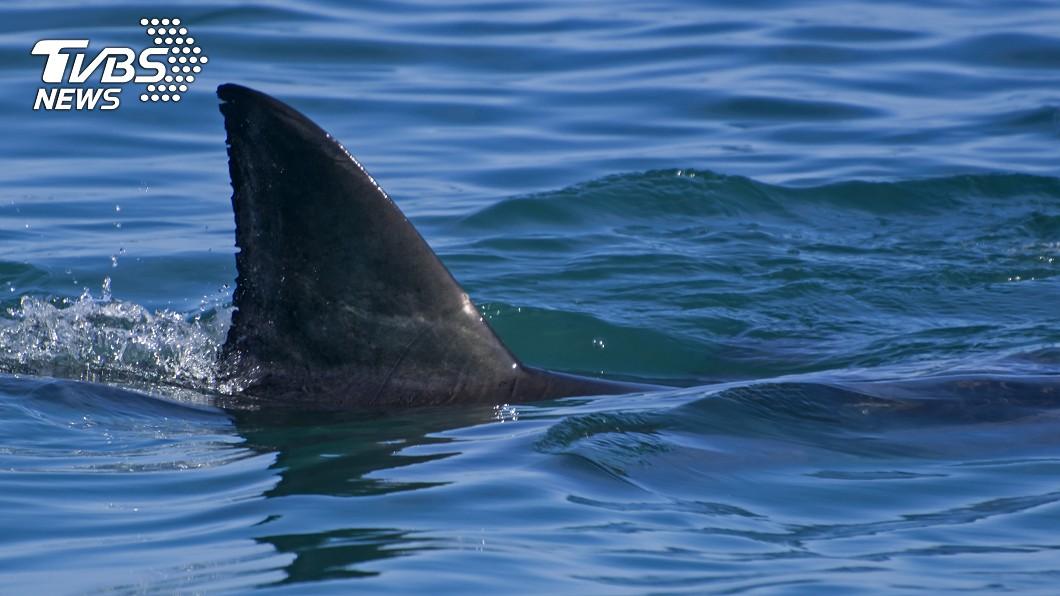 這起意外也成為夏威夷第5起鯊魚咬死人的案件。示意圖/TVBS 男游泳到一半慘遭鯊魚噬 目擊者驚:左小腿消失了