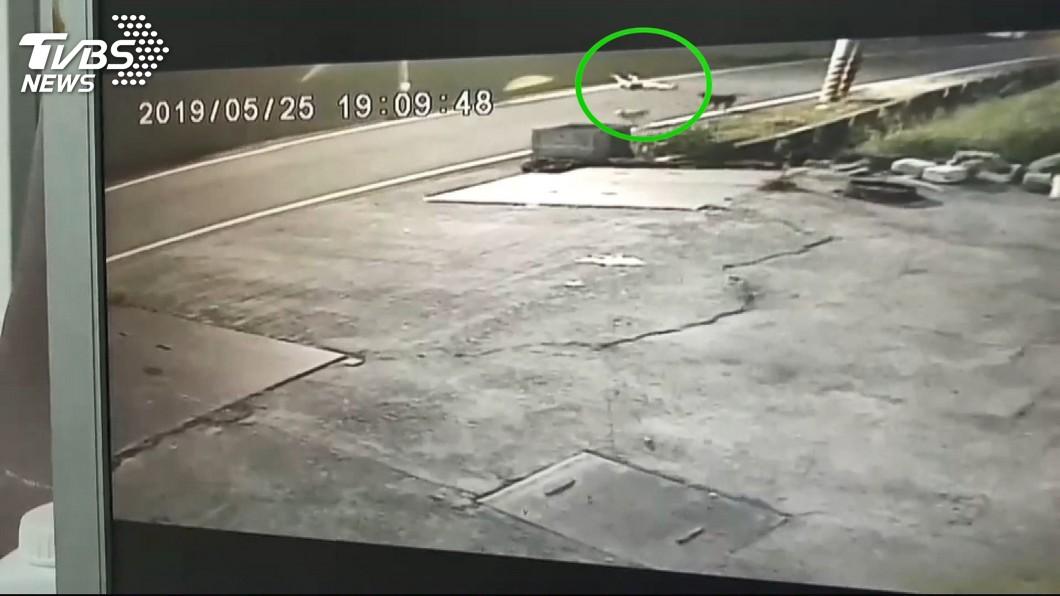 圖/TVBS 高中生被野狗追摔車顱內出血 彰化動防所捕獲凶手