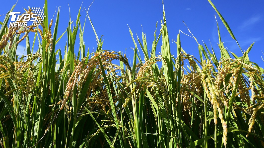 示意圖/TVBS 陳吉仲:32年前農運存記在心 要讓農民收入增加