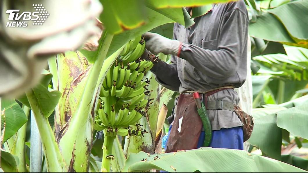 示意圖/TVBS 立院三讀 散播農產品價格假消息最重可處30萬