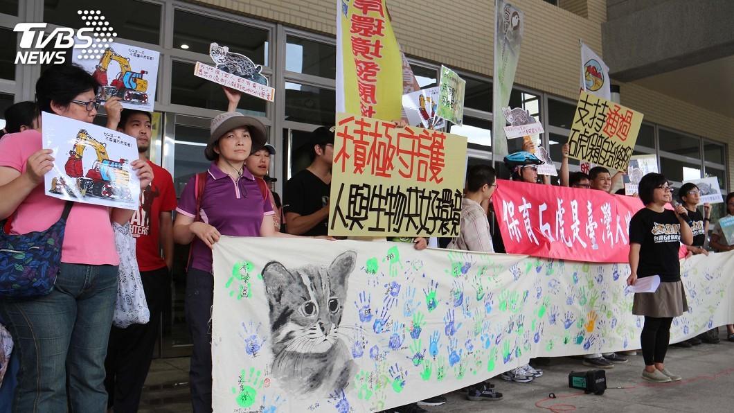 圖/中央社 苗縣石虎保育條例闖關 保育團體到場聲援