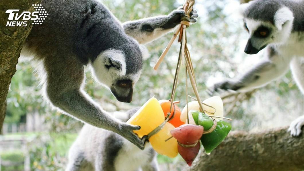 圖/中央社 應景端午節打造果汁粽 訓練動物覓食行為